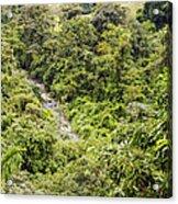 Costa Rica Zip Line View Acrylic Print