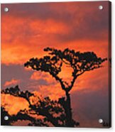 Costa Rican Sunset Acrylic Print