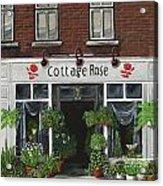 Cottage Rose Acrylic Print