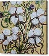 Cotton #2 - Cotton Bolls Acrylic Print