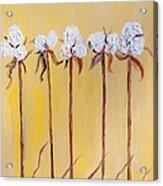 Cotton Chorus Line Acrylic Print