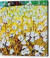 Cotton Fields Back Home Acrylic Print by Eloise Schneider