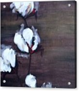 Cotton In Red 2 Acrylic Print