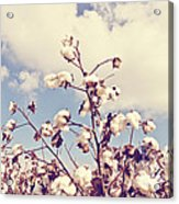 Cotton In The Sky With Filter Acrylic Print