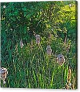 Cotton Monkey Heads Acrylic Print