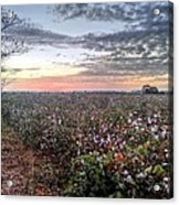 Cotton Sunrise  Acrylic Print by JC Findley