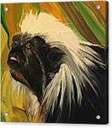 Cotton Top Tamarin Zack Half Of All Proceeds Go To Jungle Friends Primate Sanctuary Acrylic Print