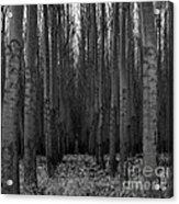 Cottonwood Alley Monochrome Acrylic Print