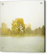 Cottonwood And Mist Acrylic Print