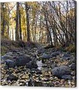 Cottonwood Creek Near Deer Lodge Montana Acrylic Print by Dana Moyer