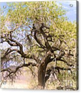 Cottonwood Tree Digital Painting Acrylic Print