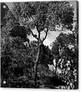 Cottonwood Treem Zion Canyon, Utah. 1929 Acrylic Print