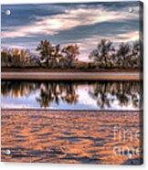 Cottonwoods At Barr Lake Acrylic Print