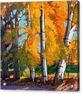 Cottonwoods Acrylic Print