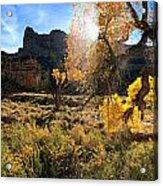 Cottonwoods In Buckhorn Wash 4055 Acrylic Print
