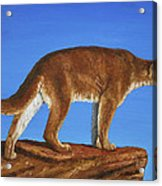 Cougar Cliff Acrylic Print