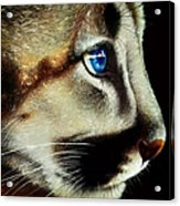 Cougar Cub Acrylic Print