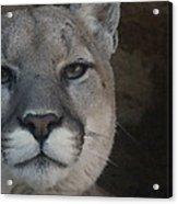 Cougar Digitally Enhanced Acrylic Print