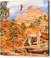Cougar - Don't Move Acrylic Print by Crista Forest