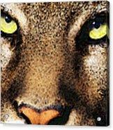 Cougar Eyes Acrylic Print