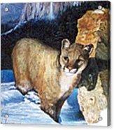 Cougar In Snow Acrylic Print