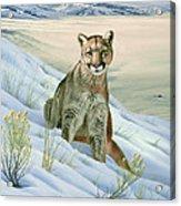 'Cougar in Snow' Acrylic Print