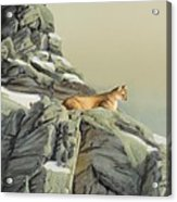 Cougar Perch Acrylic Print