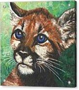 Cougar Prince Acrylic Print