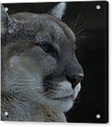 Cougar Profile Acrylic Print