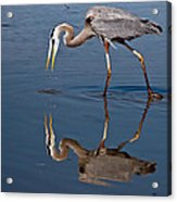 Could That Be How I Really Look Acrylic Print