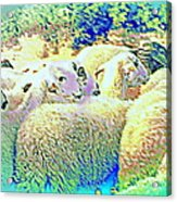 Counting The Sheep But Can't Sleep  Acrylic Print