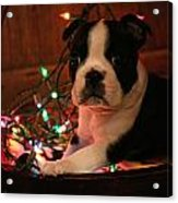 Country Christmas Puppy Acrylic Print