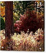 Country Color 28 Acrylic Print