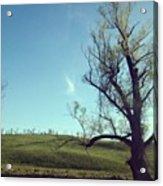 #country #countryside #tree #bluesky Acrylic Print