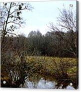 Country Creek Acrylic Print
