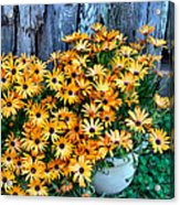 Country Floral Acrylic Print