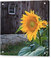 Country Flower Square Acrylic Print