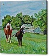 Country Horses Acrylic Print
