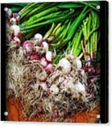 Country Kitchen - Onions Acrylic Print