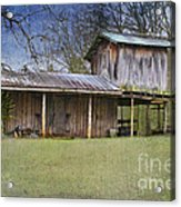 Country Life Acrylic Print by Betty LaRue