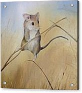 Country Mouse Acrylic Print