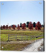 Country Roads Acrylic Print by Jinx Farmer