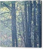 Country Woodlands Acrylic Print