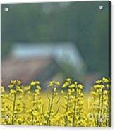 Country Yellow Acrylic Print