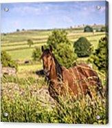 Countryside Horse Acrylic Print