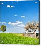 Countryside Landscape During Spring With Solitary Trees And Fence Acrylic Print