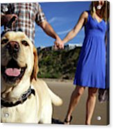 Couple Take Their Dogs For A Walk Acrylic Print