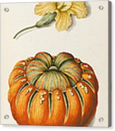 Courgette And A Pumpkin Acrylic Print