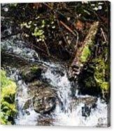 Covell Creek 4 Acrylic Print