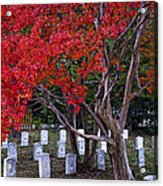 Covered In Fall Colors Acrylic Print